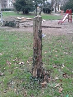 Les arbres malades de la tronçonneuse parc Soulage
