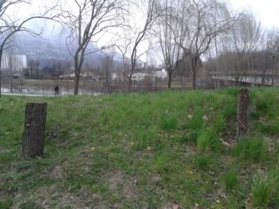 deux arbres Verts?/PG du stade des Alpes