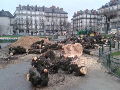 La place Victor Hugo ne se remettra pas avant longtemps de l'abattage de 19 marronniers