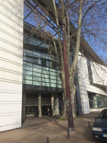 Alain Carignon et son équipe imposaient à l'urbanisme le respect des arbres: ici avenue Maréchal Randon devant le nouveau Musée