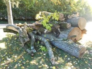 1 c paul mistral arbre