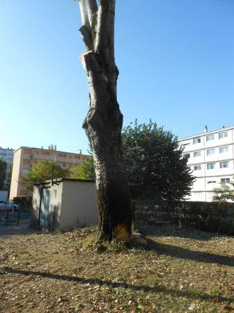 5 arbres rue jean bart