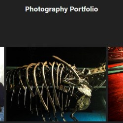 #Adobe #Portfolio - giving it a go