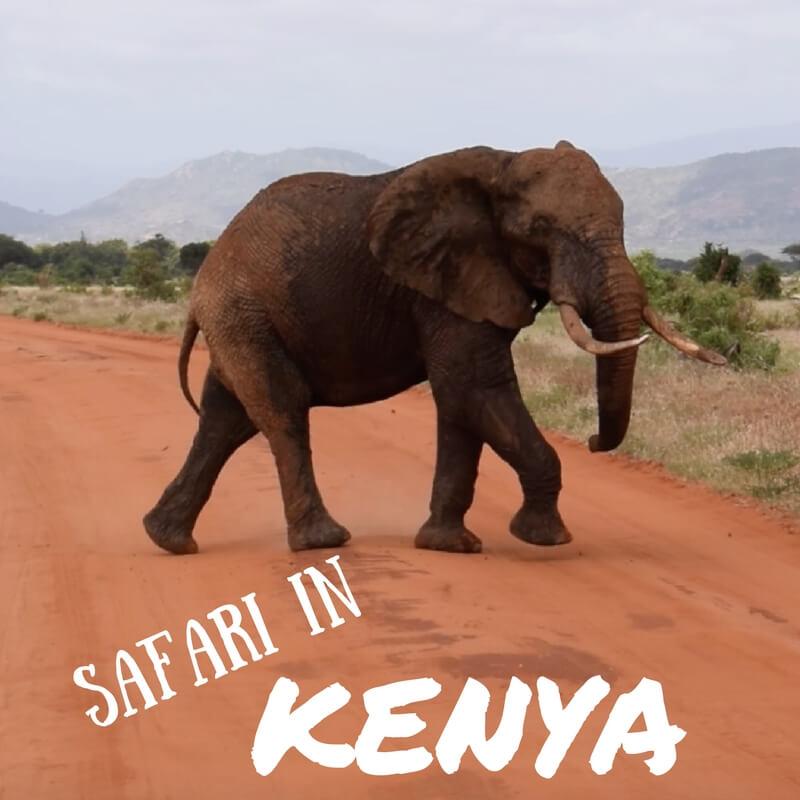 Safari in the Tsavo East National Park, Kenya