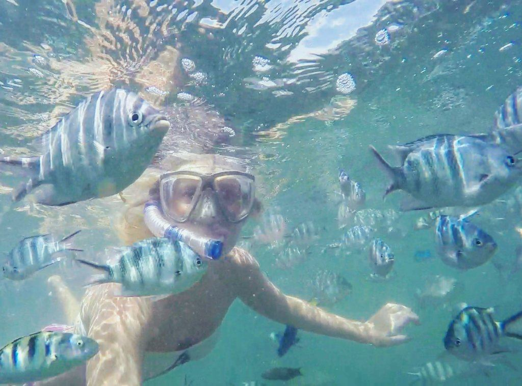 Snorkelling in good company in the Malindi Marine Park
