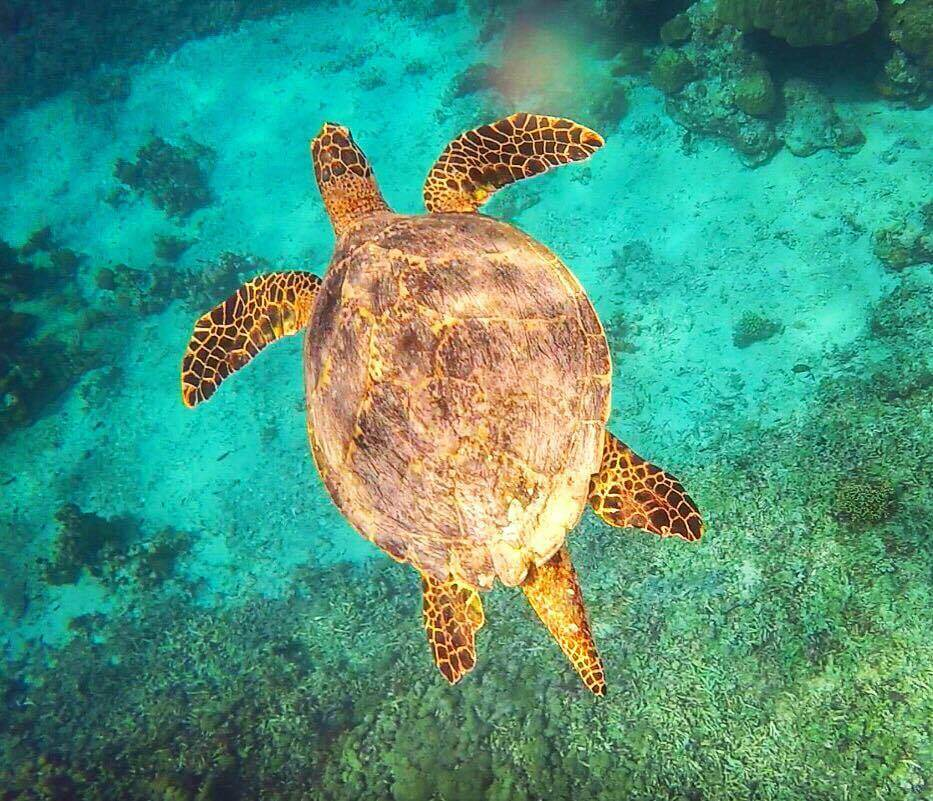 One of the many turtles we saw while snorkelling in Gili T