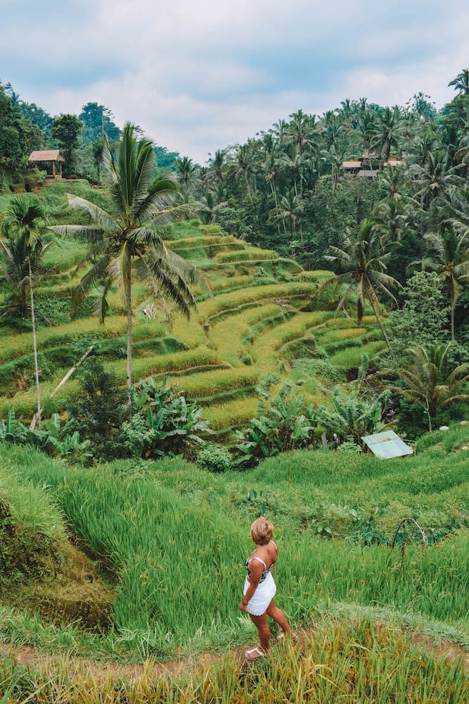 The famous terraced rice fields of Ubud
