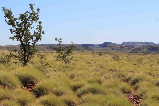 Chichester Range and spinifex