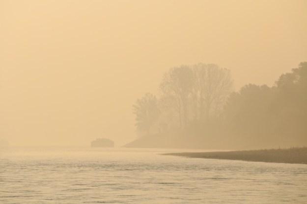 Golden mist at dawn