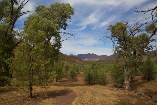Wilpena Pound in South Australia