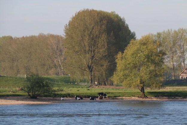 Bucolic scenes as we near Nijmegen