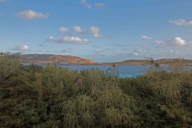 Banksias, rock and ocean