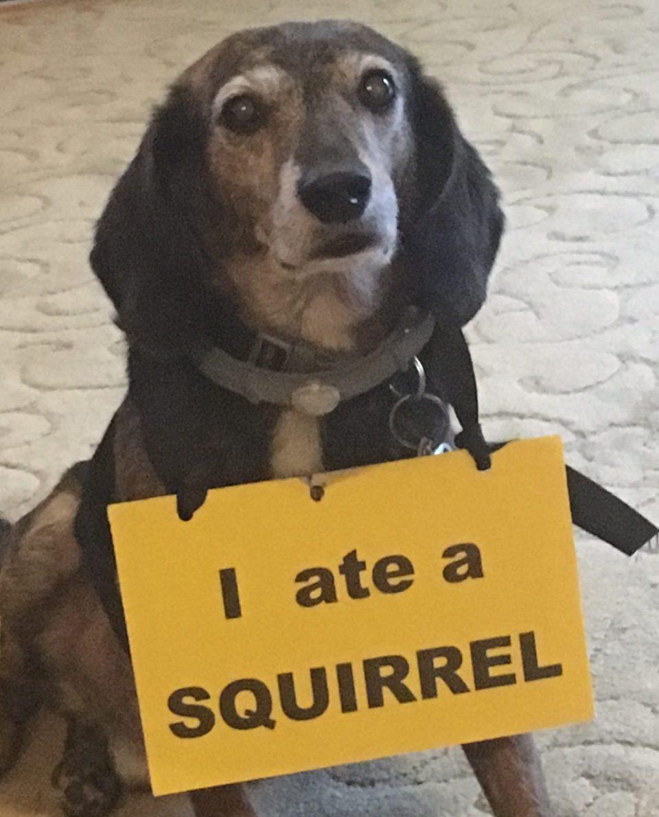 Shame On This Dog!