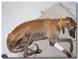 Ebro dog