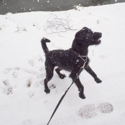 Dog and snow