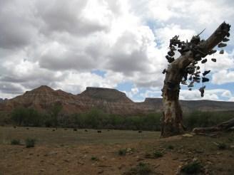 Shoe Tree - Utah