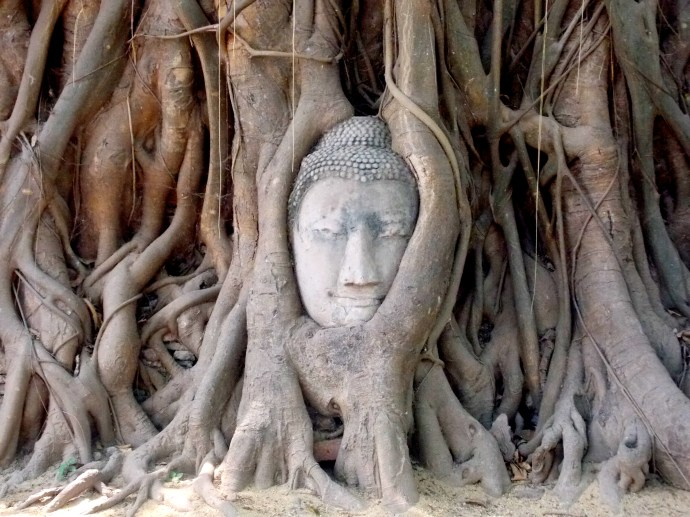 Buddha head in the tree at Wat Mahathat