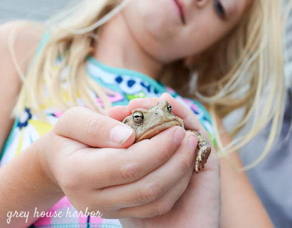 summer toad  |  greyhouseharbor.com