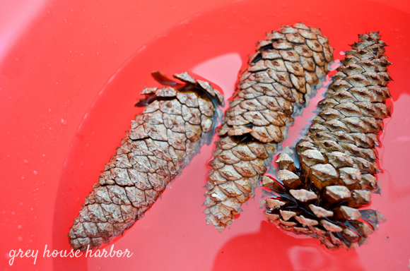 how to clean pinecones  greyhouseharbor.com