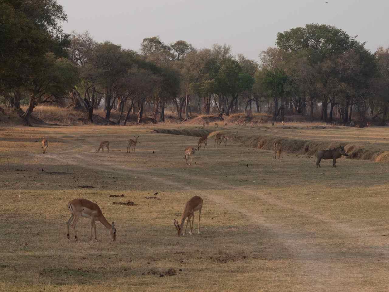 Zambia-8