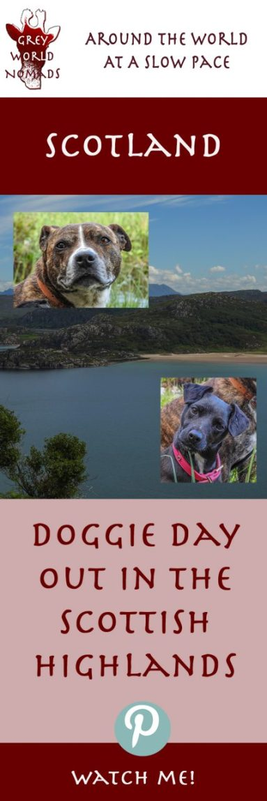 scotland-doggie-day-out