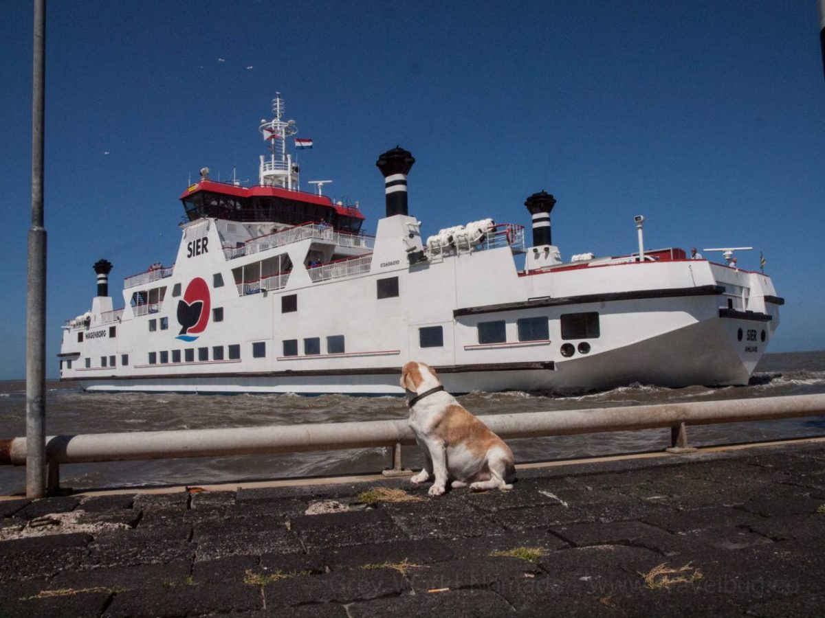 Hop On The Ferry With Dog To And From The UK
