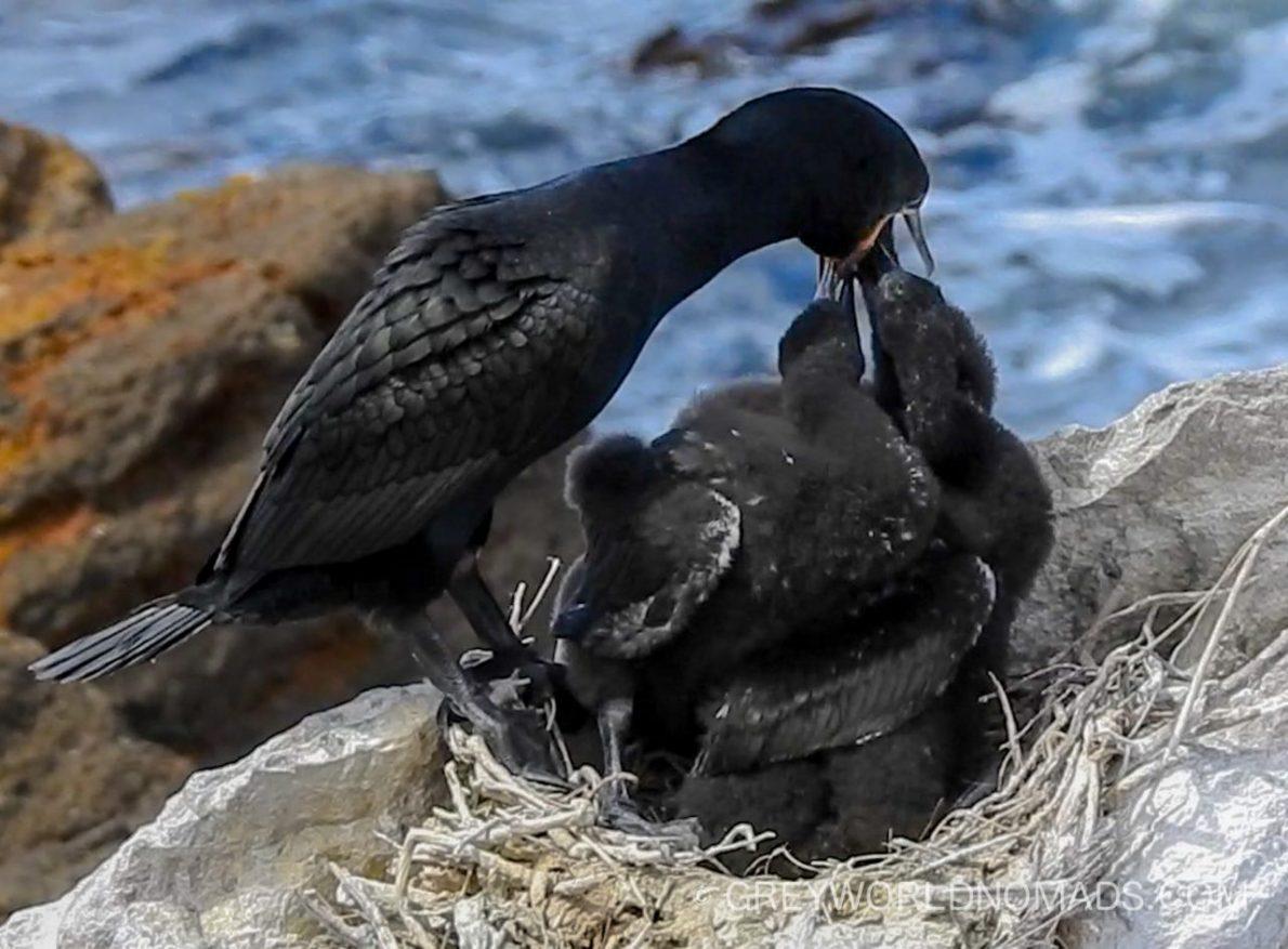 Stony Point Pinguin Colony, Betty's Bay, South Africa