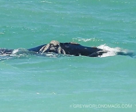De Mond Nature Reserve, Western Cape, South Africa