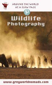 wildlife-photography-wildebeest