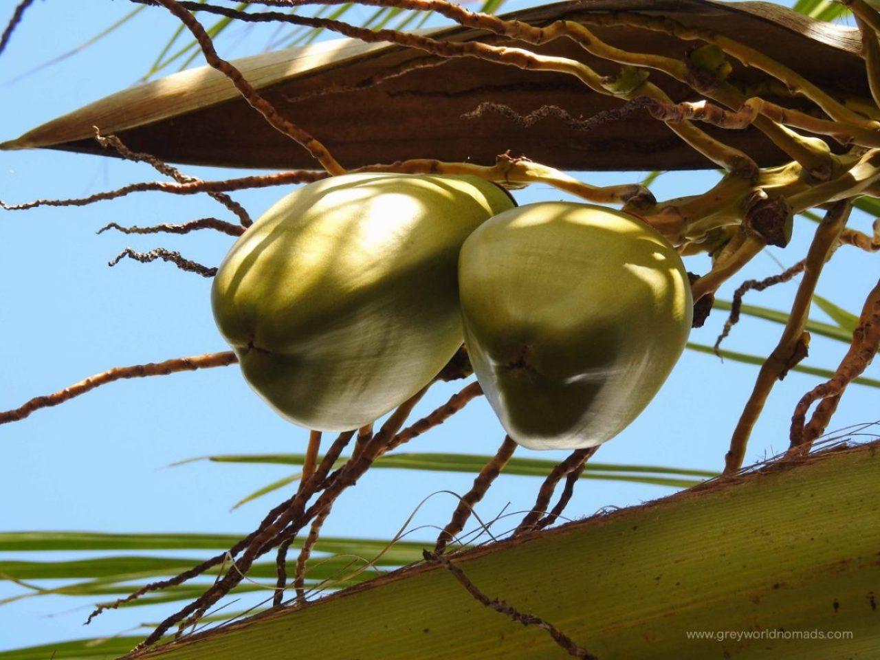 Praslin: Vallée de Mai Nature Reserve
