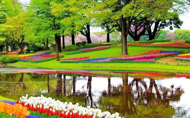 Tulpenblüte Keukenhof Beste Zeit, Reise Tulpenblüte Holland, Busreise Keukenhof 2018, Flusskreuzfahrt zur Tulpenblüte nach Holland, Tulpenfest in Holland.
