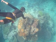 Madi diving near Heron Bommie
