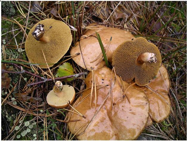 Как отличить грибы.