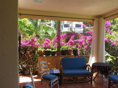Again, her front walls that face the street are comprised of bougainvillea vines.
