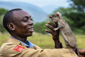 5_giant-african-pouched-rat
