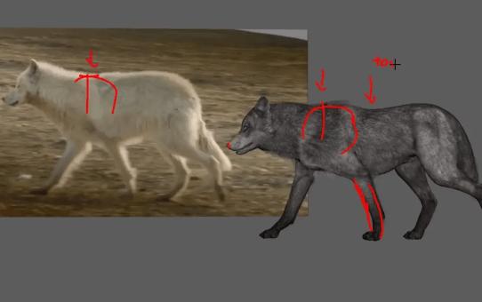Wolf Animation -Quadraped animation feedback