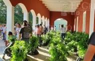 Entregan más árboles a personas de Motul y de las comisarías