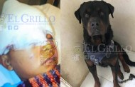 Pagará las curaciones del niño al que hirió su rottweiler, en Progreso
