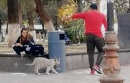 Sacó a pasear a su tigre siberiano y se lo asegura la Profepa
