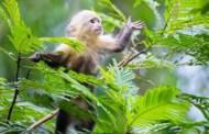 Científicos detectan a primates portadores del virus del Zika