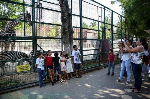 Muere una cebra en el Centenario de Mérida, por un golpe de calor