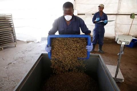 Reciclan excremento humano para hacer comida de animales