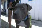 Una pitbull salvó a una bebé de morir en un incendio: La arrastró del pañal
