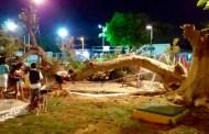 Se cae un árbol de flamboyán en un parque y lesiona a  cinco niños