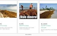 Hasta mil pesos el kilo de sargazo en internet