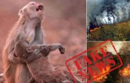 Filtran fotos falsas del incendio en el Amazonas para alarmar
