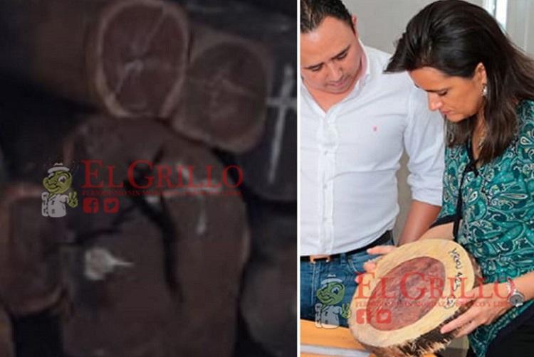 Aseguran madera en la Aduana de Progreso: Presunta procedencia ilícita