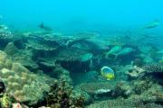 Aumento de ácido en los océanos provocaría la extracción de la vida marina