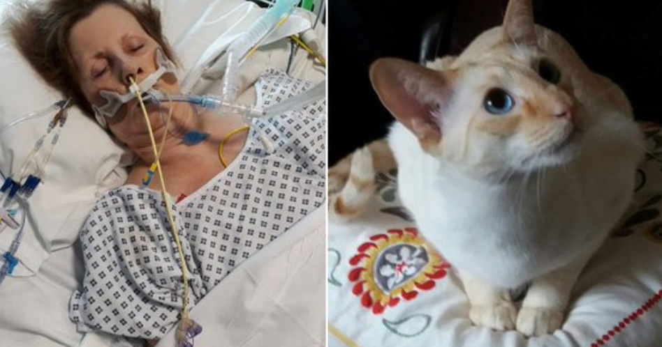 La rasguñó su gato y entró en coma: Le trasmitió una bacteria carnívora