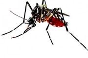 Diagnostican el primer caso de dengue por transmisión sexual, en España
